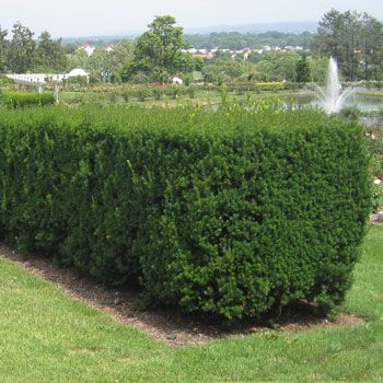 The 25 Best Pruning Olive Trees Ideas On Pinterest Olive Ball Image Beauty Box Australia And