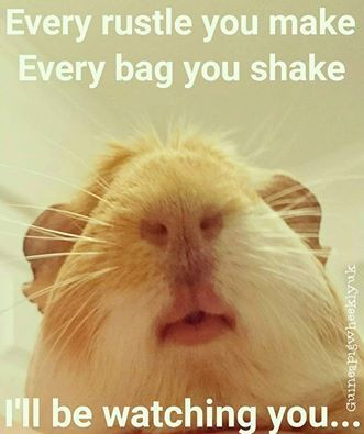"""Every rustle you make, every bag you shake, I'll be watching you..."""