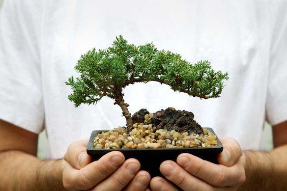 9 Plantas Negativas De Las Que Debes Deshacerte Ahora Ya Según El Feng Shui Plantas Para Atraer Dinero Feng Shui En Español Planta De La Abundancia