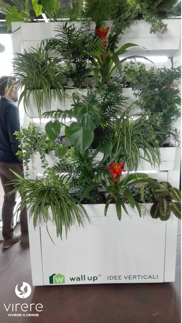 Oltre 25 fantastiche idee su piante ufficio su pinterest - Piante per ufficio ...
