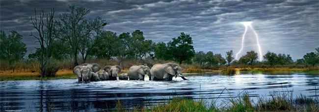 Herd of Elephants Jigsaw Puzzle by Artist Alexander von Humboldt