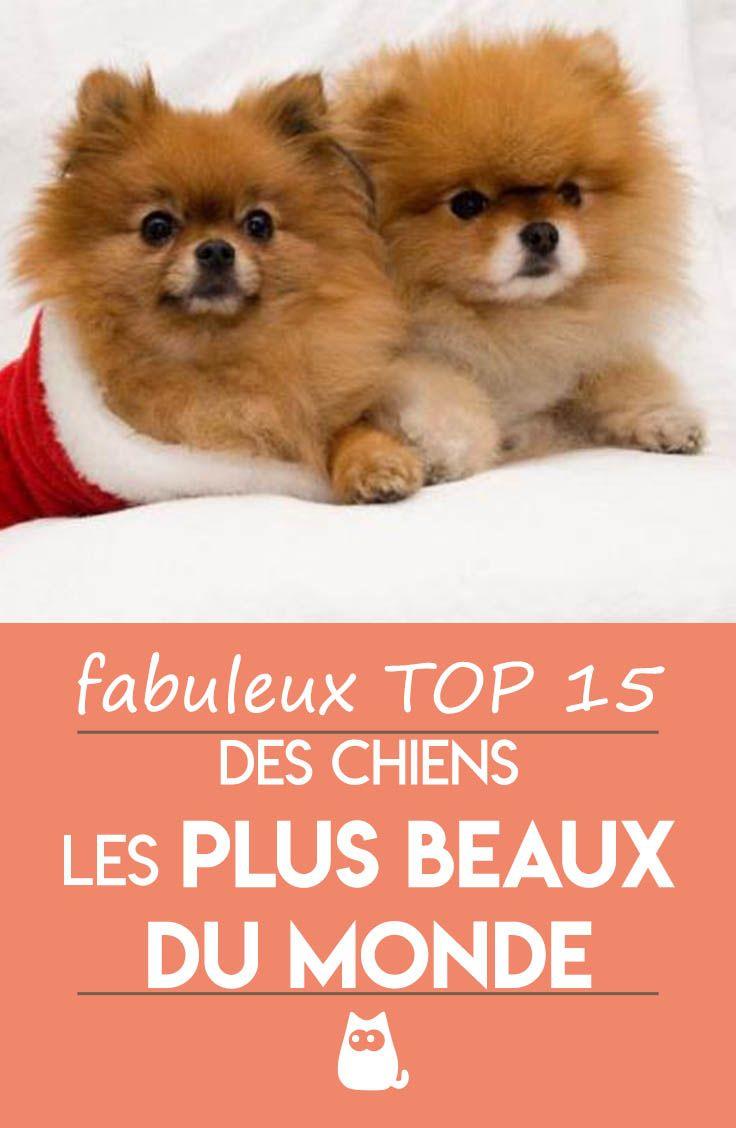 Le Plus Beau Chien Du Monde : chien, monde, Quels, Beaux, Chiens, Monde, Chien,, Chien