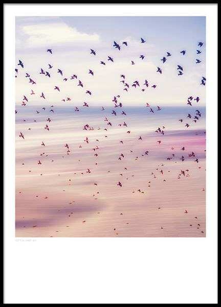 Cotton candy sky, poster in the group Posters  / Sizes / 61x91cm   24x36
