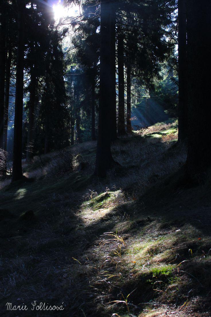 Mystery forest (in Čertova hora - Harrachov)