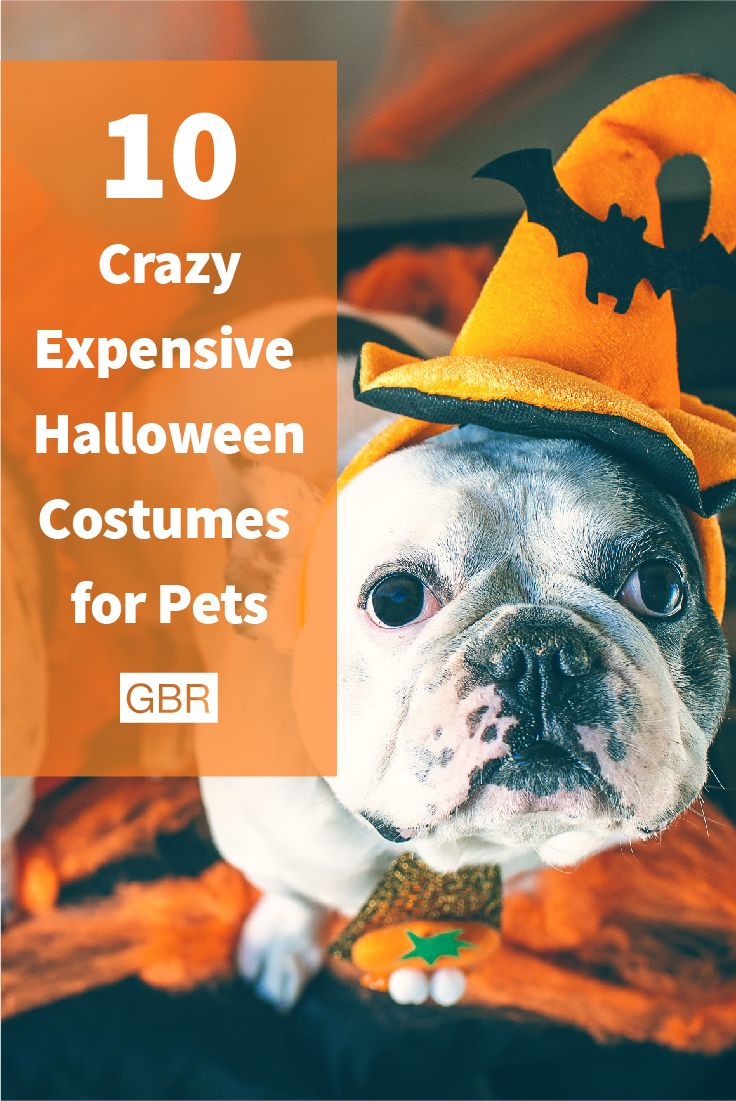 best halloween for pets dog costumes images on pinterest
