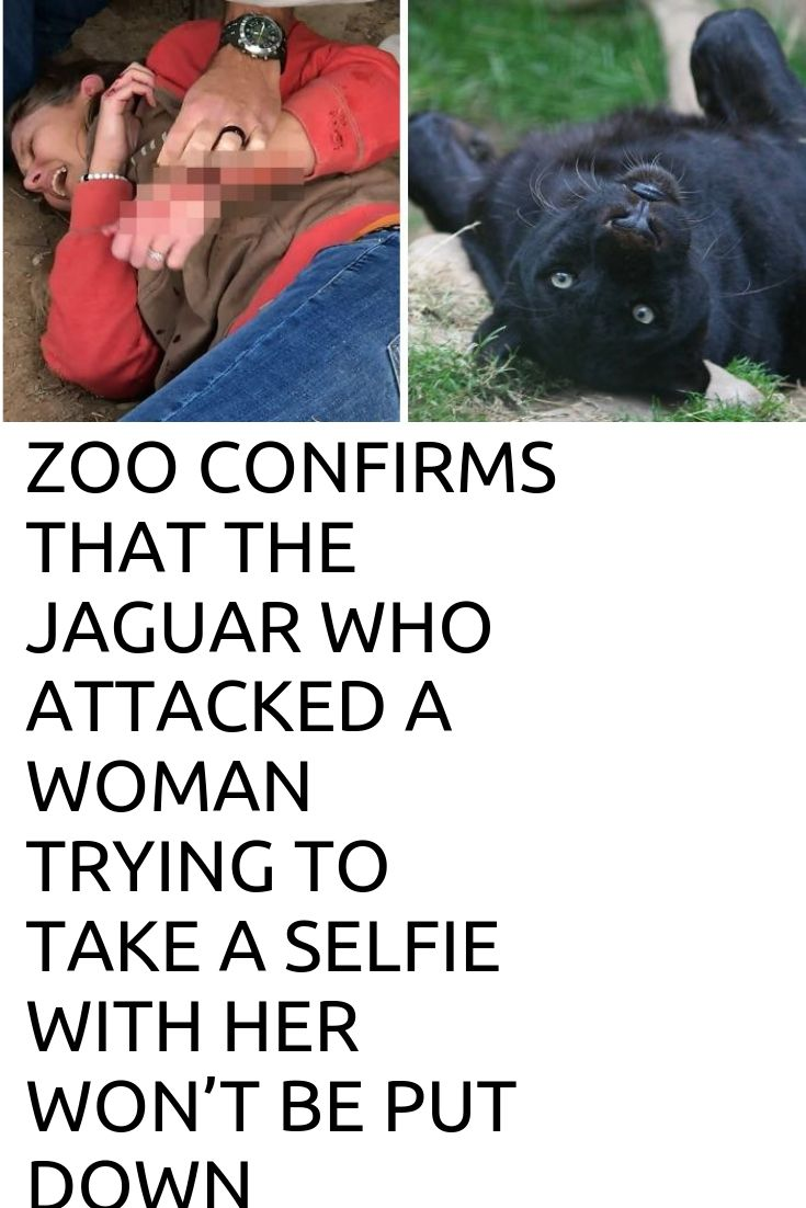 Zoo Confirms That The Jaguar Who Attacked A Woman Trying To