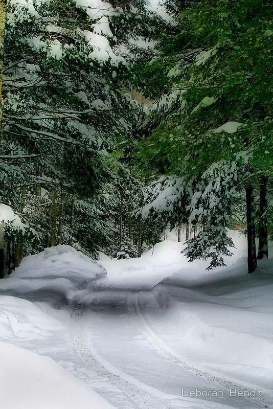 Snowy lane