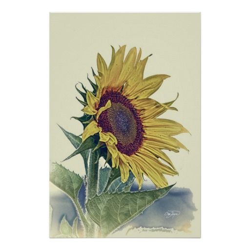 20 best ideas about Sunflowers on Pinterest | Vintage ...