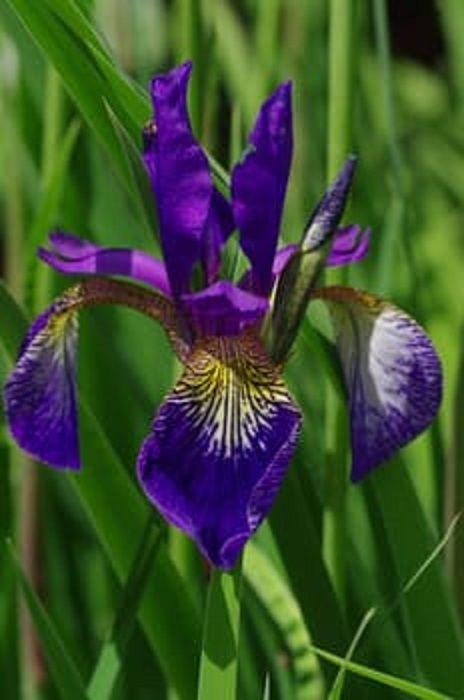 blossom-bloom-blue-violet-69929