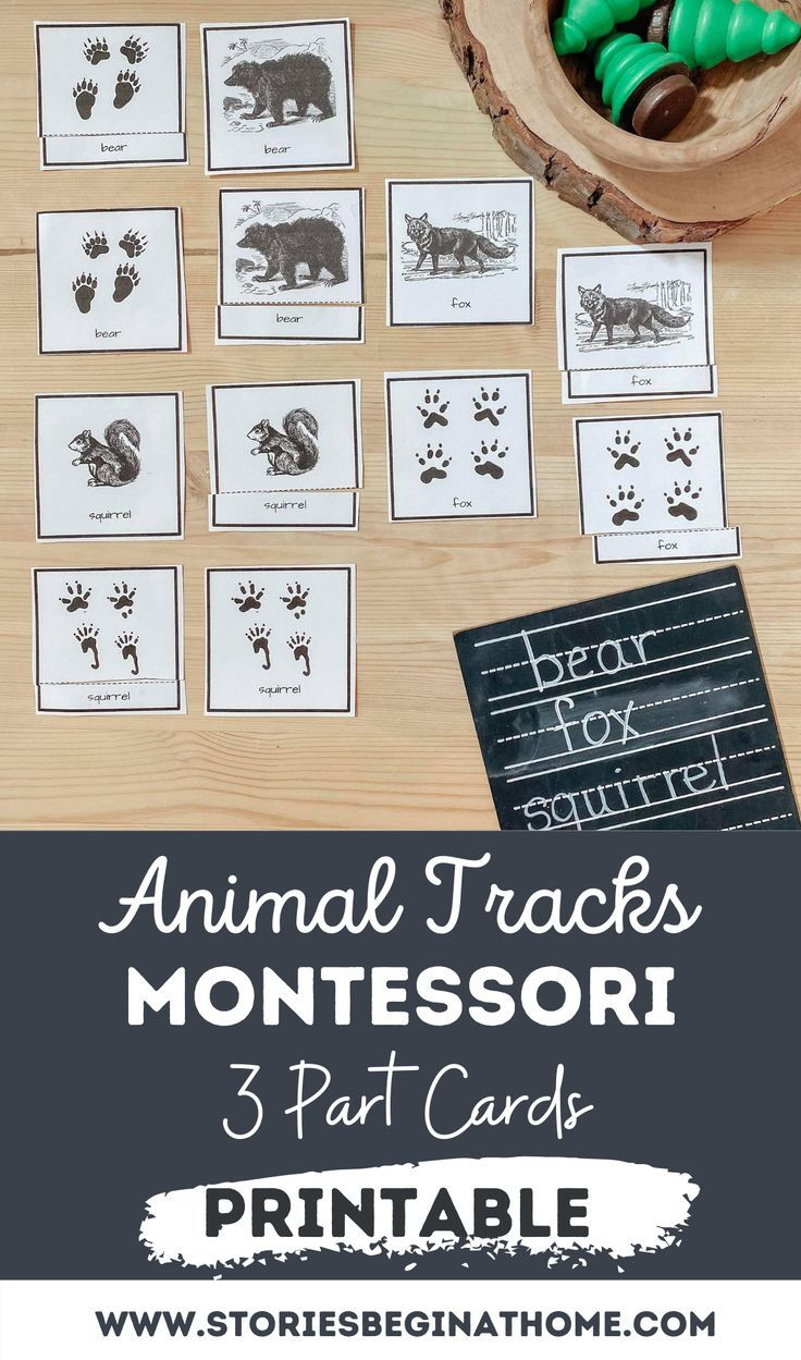 Animal And Animal Tracks Montessori 3 Part Cards Stories Begin At Home Autumn Activities For Kids Animal Activities For Kids Bible Activities For Kids [ 1249 x 736 Pixel ]