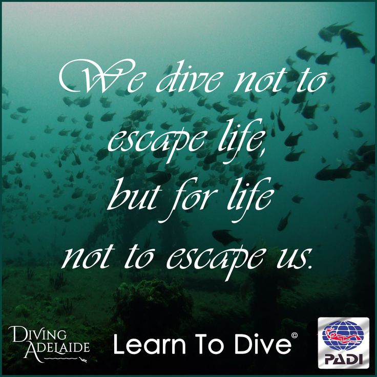 We dive not to escape life, but for life not to escape us!