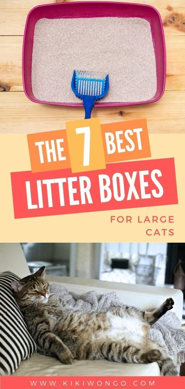 The 7 Best Litter Box For Large Cats In 2020 Best Litter Box Litter Box Tidy Cat Litter