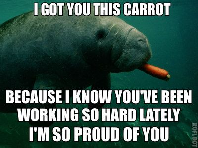 everyone needs calming manatee, because large manatees looming encouragingly onto the screen, saying Ryan-Gosling-Hey-Girl-like things, are hysterically funny