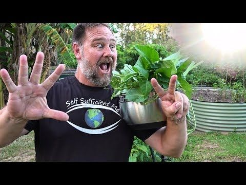 7 Top Vegetables Easy To Grow In A Hot Summer Youtube In 640 x 480