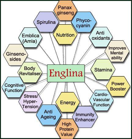 #Nutrition + #Energy + #Stamina = Englina #antioxidants, #spirulina, #immunity, #stress, #hypertension, #proteins, #ginseng, revitaliser, #antiaging, #cardiovascular, Emblica officinails(amla)