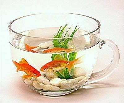 Teacup Fishbowl: