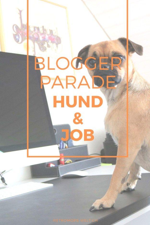 Wie geht das mit dem Hund und einem Vollzeit Job. Mia erzählt wie sie den Alltag so erlebt und was für Beschäftigung sie hat.