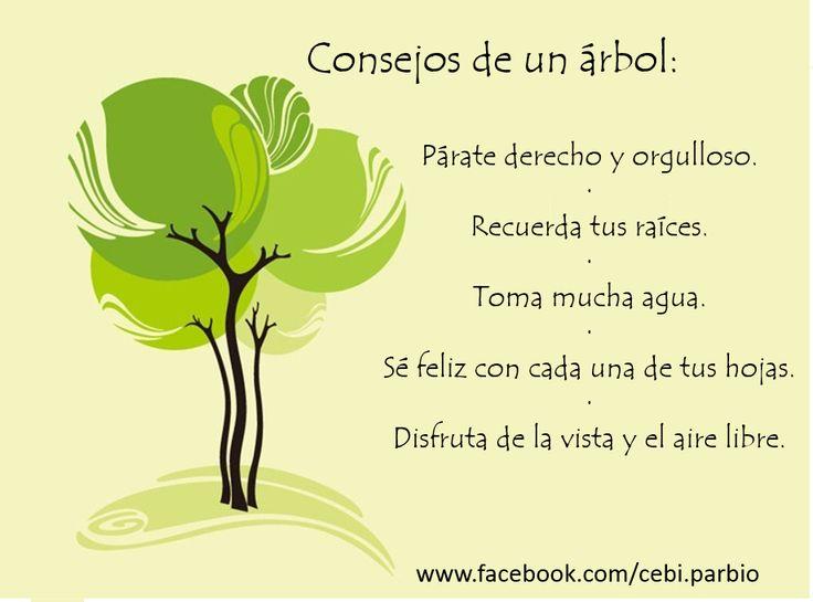 #Consejos de un #Arbol
