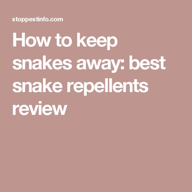 How to keep snakes away: best snake repellents review