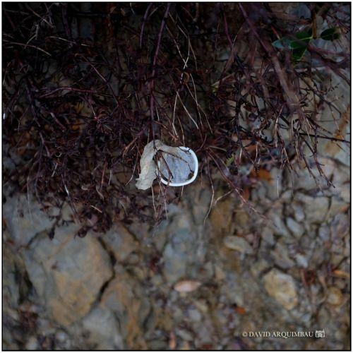 . Condom. Found in Sa Mesquida.