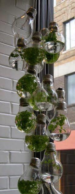 Lightbulb terrarium!