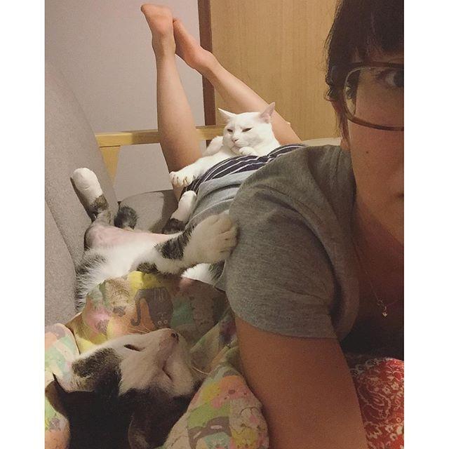 狭いソファーに3人ぎゅ〜ぎゅ〜 おこちゃんの顔〜w太ももにスッポリはまって、手はお母はんのおケツの割れ目に、ちょ〜どはさまっとるw ハッチャンは寝てる時、ぜったいどっかにタッチしてくれる寝〜❤︎ #八おこめ #ねこ部 #cat #ねこ #寝相