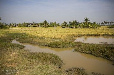 Rizières à Kampot