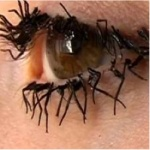 """These """"Flylashes"""" are made of real fly legs.... what every girl ...needs?! NO!: Jessica Harrison,  Boards, Dining Table, British Artists, Fake Eyelashes, Eye Lashes, Artists Jessica, Eyelashes Exten, Flying Legs"""