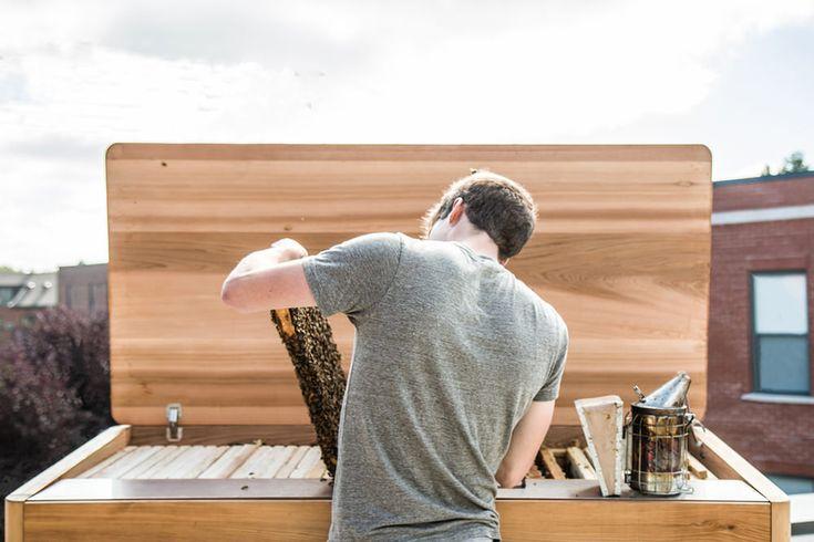 Project-B-apiculture-urbaine-design-Marc-André-Roberge-blog-espritdesign-12 - Blog Esprit Design
