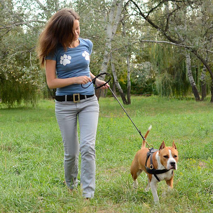 les 25 meilleures id es concernant chiens de taille moyenne sur pinterest chiens de taille. Black Bedroom Furniture Sets. Home Design Ideas