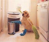 He's always been very domesticated.