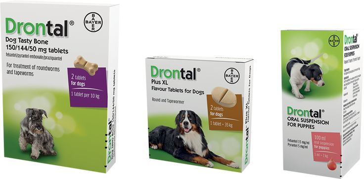Drontal what to expect after deworming your dog