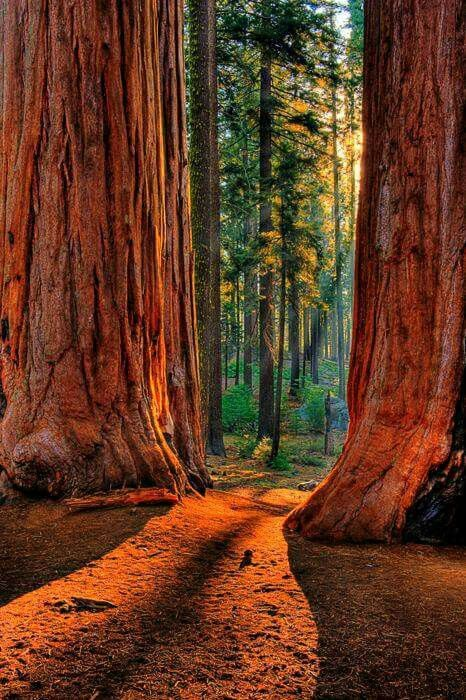 Redwood National Park - best places to visit in the US