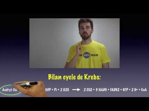 ▶ Cours de biochimie: cycle de Krebs - YouTube