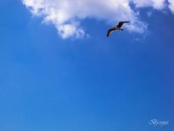 Una mañana, una gaviota…
