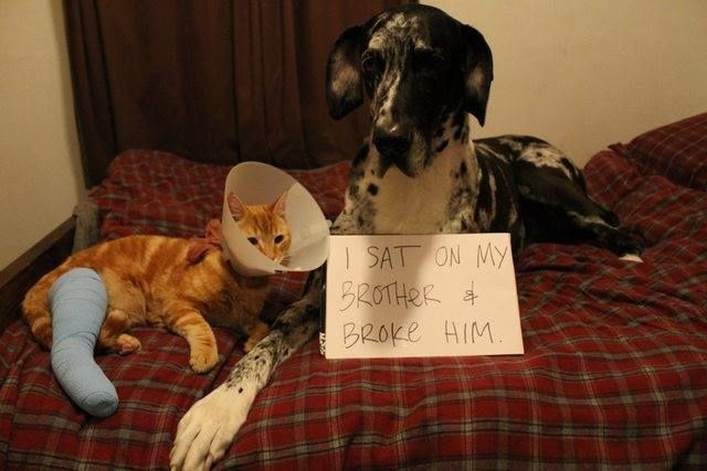 """Best dog shaming picture..It says """"I sat on my brother and broke him"""" lol"""