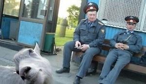 24 esilaranti photobomb di animali
