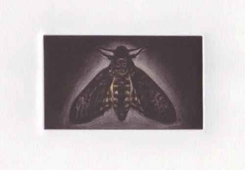 Death's Head Hawk Moth by GEORGIA PESKETT
