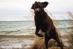 Hunde Foto: Anne und Carlos - Essen im Flug erobert 😂 Hier Dein Bild hochladen: http://ichliebehunde.com/hund-des-tages #hund #hunde #hundebild #hundebilder #dog #dogs #dogfun #dogpic #dogpictures