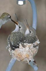 Hummingbird House: Hummingbird House