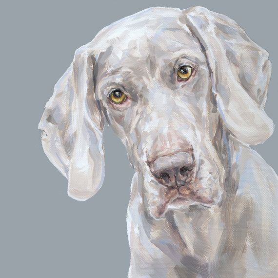Weimaraner perro arte grabado - ed. Ltd firmó