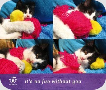 Cat Friendship | @FairMail - Fair Trade Cards - D326-E | Love, Cute, Cat, Hug, Yarn, Animals