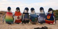 Pinguini con il maglione? Non è un gioco, ne hanno davvero bisogno e tutti possono aiutarli
