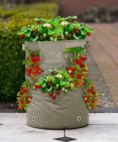 Sac-jardinière avec 15 fraisiers | Fruits & Légumes | Bakker France