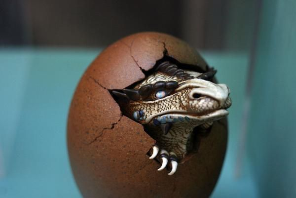 dragon hatching 35 Shivery Pictures of Dragons