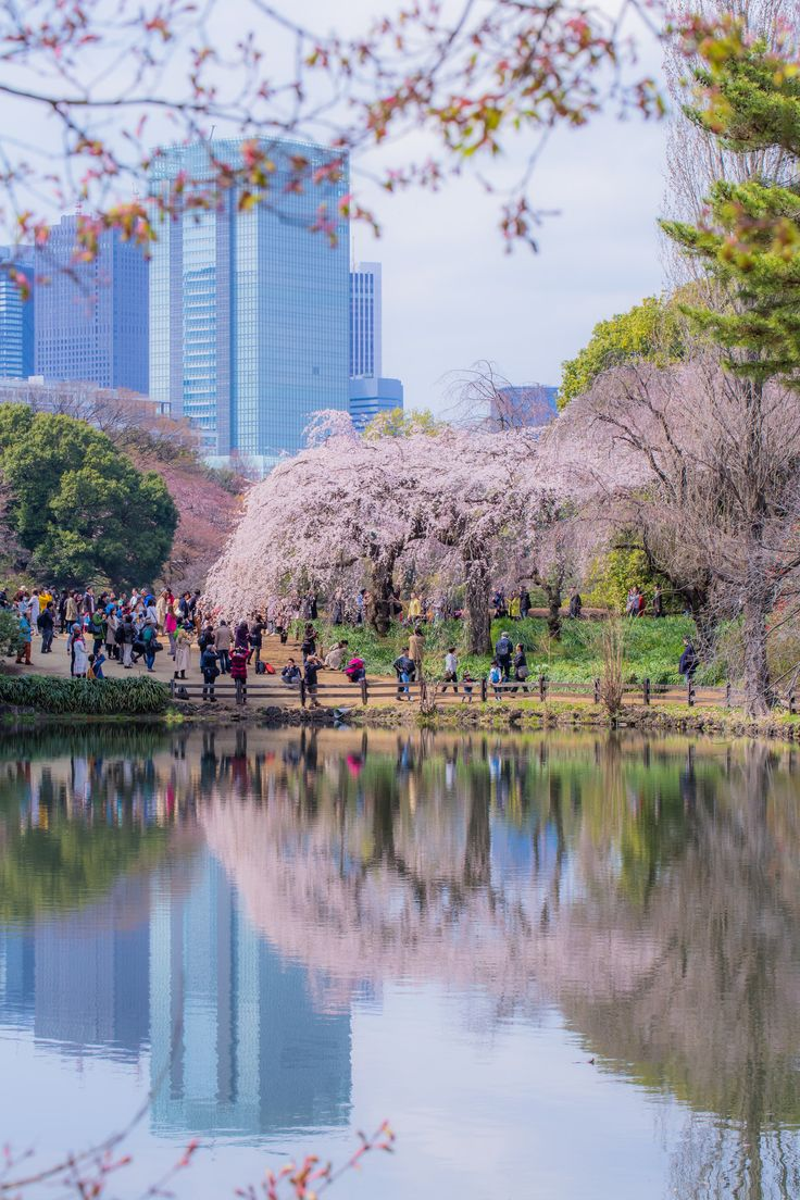 Shinjuku Gyoen National Garden Shinjiku Tokyo [1365x2048] Photo by Sharleen Chao. wallpaper/ background for iPad mini/ air/ 2 / pro/ laptop @dquocbuu