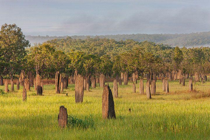 Termite boussole, Australie. Non seulement ces termites construisent des maisons de 3 mètres de haut, mais celles-ci sont également orientées nord-sud avec une surface plane et un système de ventilation pour garder une température agréable à l'intérieur. 10 constructions impressionnantes qui démontrent que les animaux sont de formidables architectes