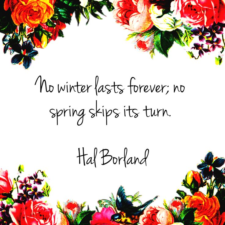 Get the #perfect #look for your #designs with PixTeller!  #photoeditor #imagemaker #spring #nature #green #hello #love #sunny ##love #words #quoteimages #inspirationalquotes #storytelling #flowers #designinspiration #lifequotes #livethemoment #standup