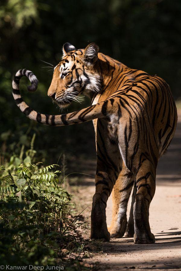 Head or Tail.... by Kanwar Deep Juneja - Photo 108460155 / 500px