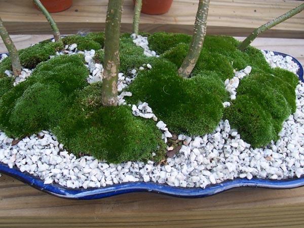 25 best ideas about growing moss on pinterest moss garden moss paint and beautiful gardens. Black Bedroom Furniture Sets. Home Design Ideas
